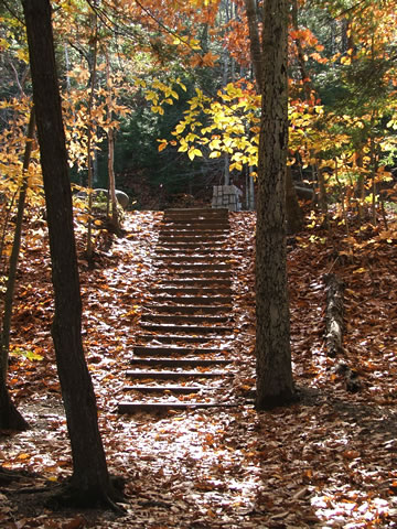 Steps during autumn
